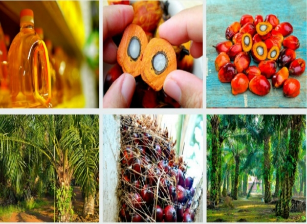 UCO Supplier - Palm by Product